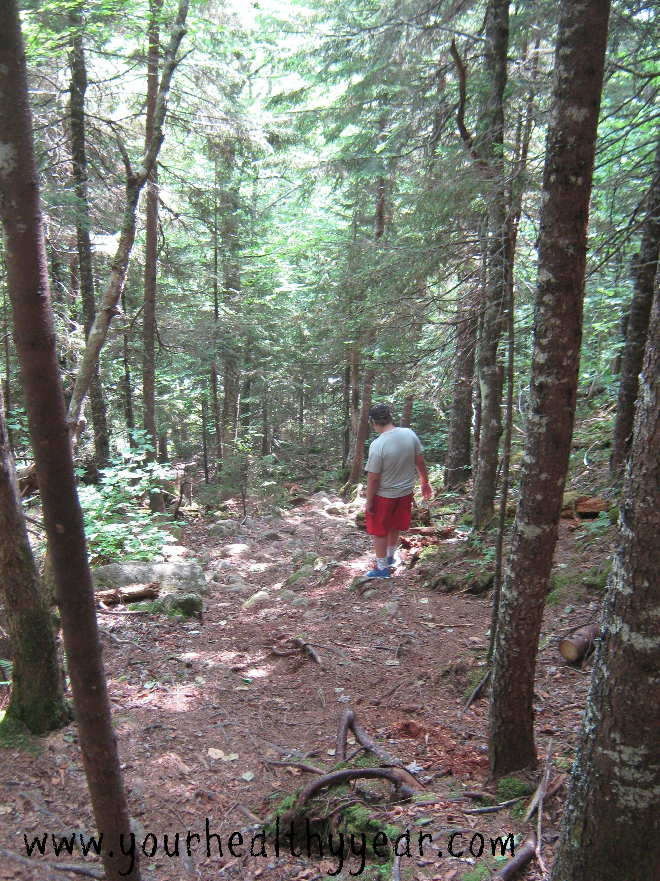 moosehorn forest trail