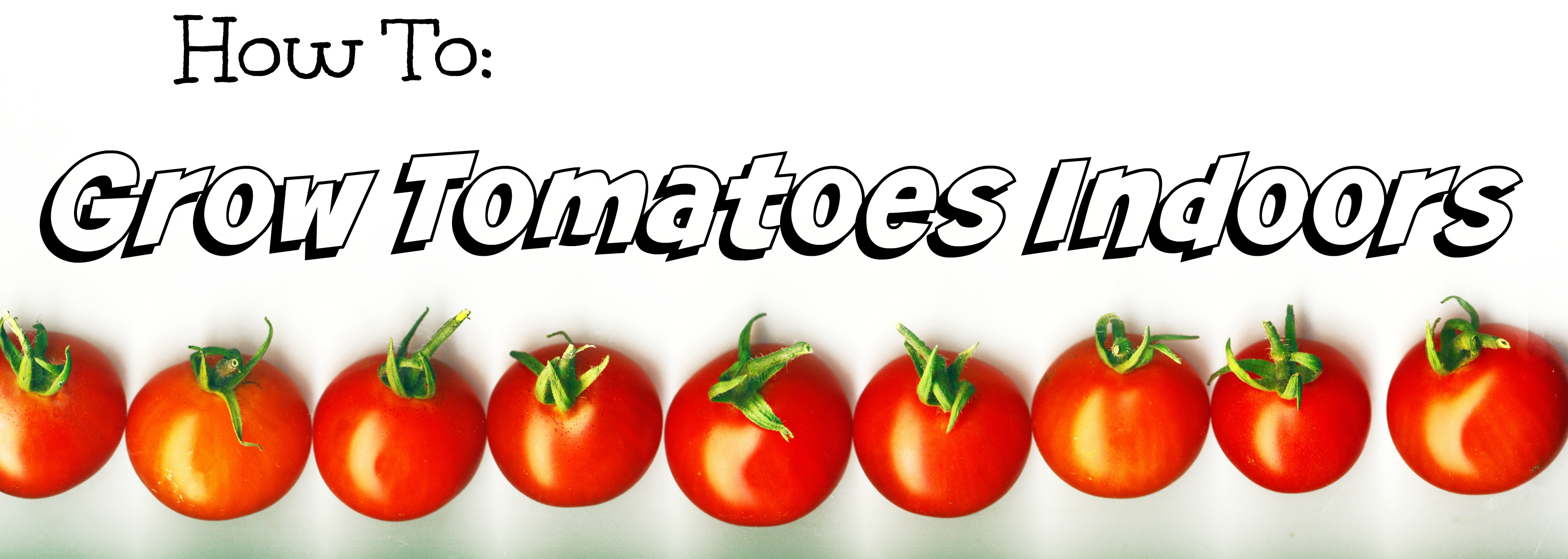 Growing Tomatoes Indoors Can Be Done Easily