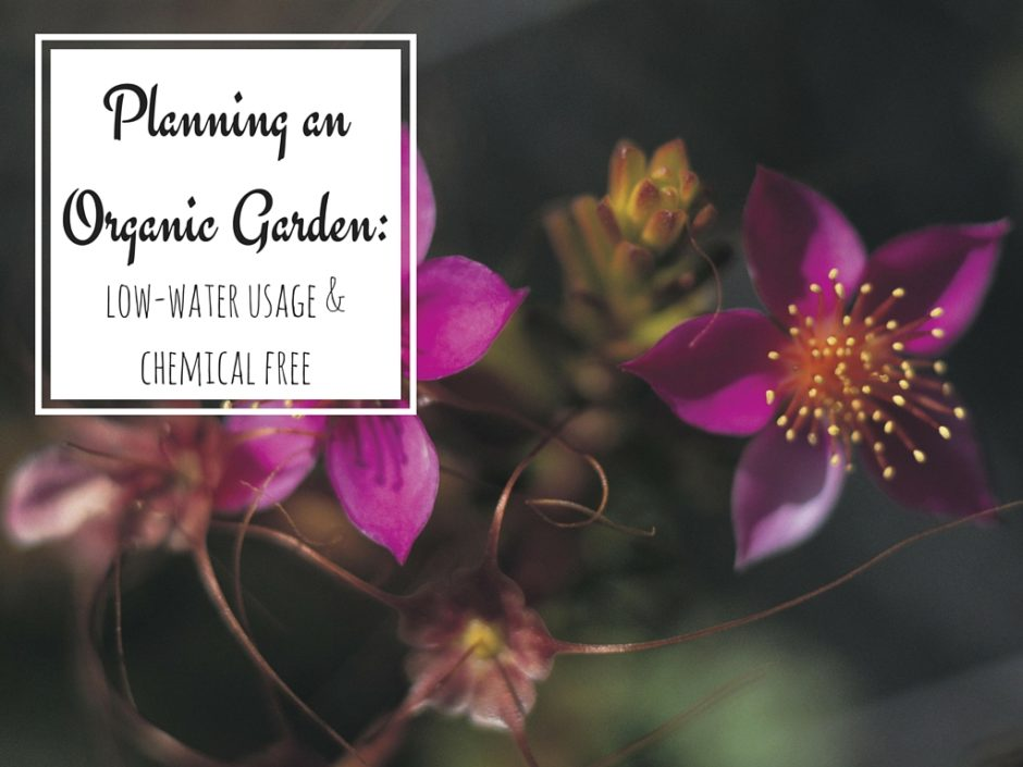 Tips for Planning an Organic Garden