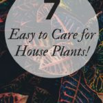 7 Amazing House Plants that are easy to care for!