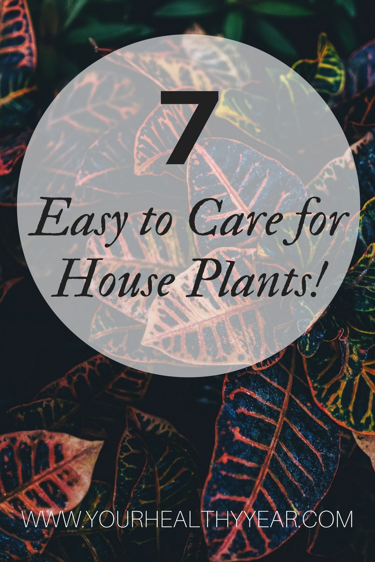 7 amazing house plants that are easy to care for just a for Easy to take care of plants