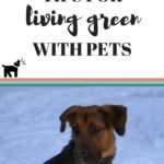 Living Green with Pets